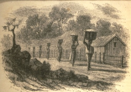 Carrying Cotton to the Gin, U.S. South, 1850s