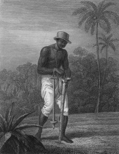 Planting Cotton (?) Seeds, Surinam, 1805-07