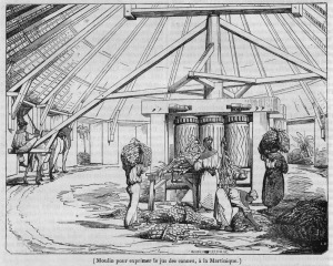 Animal-Powered Sugar Mill, Martinique, 1835